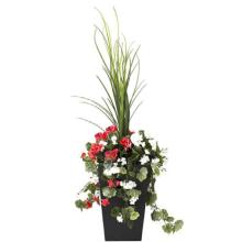 Dracaena and Red & White Geranium Potted Floral Arrangement