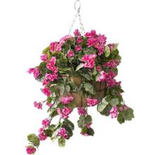 Hanging Basket with Pink Geraniums